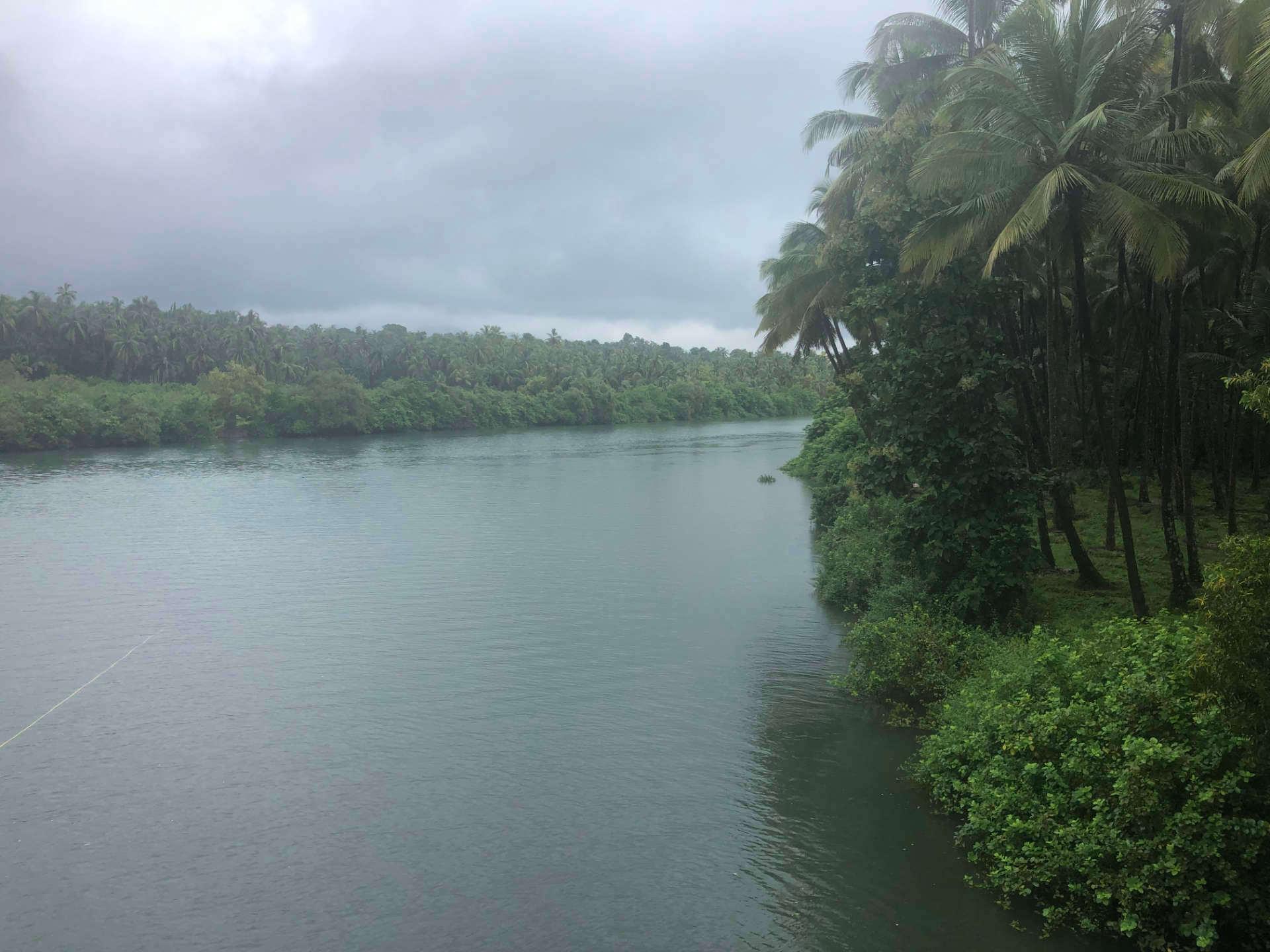Indine Goa Fluss Dschungel