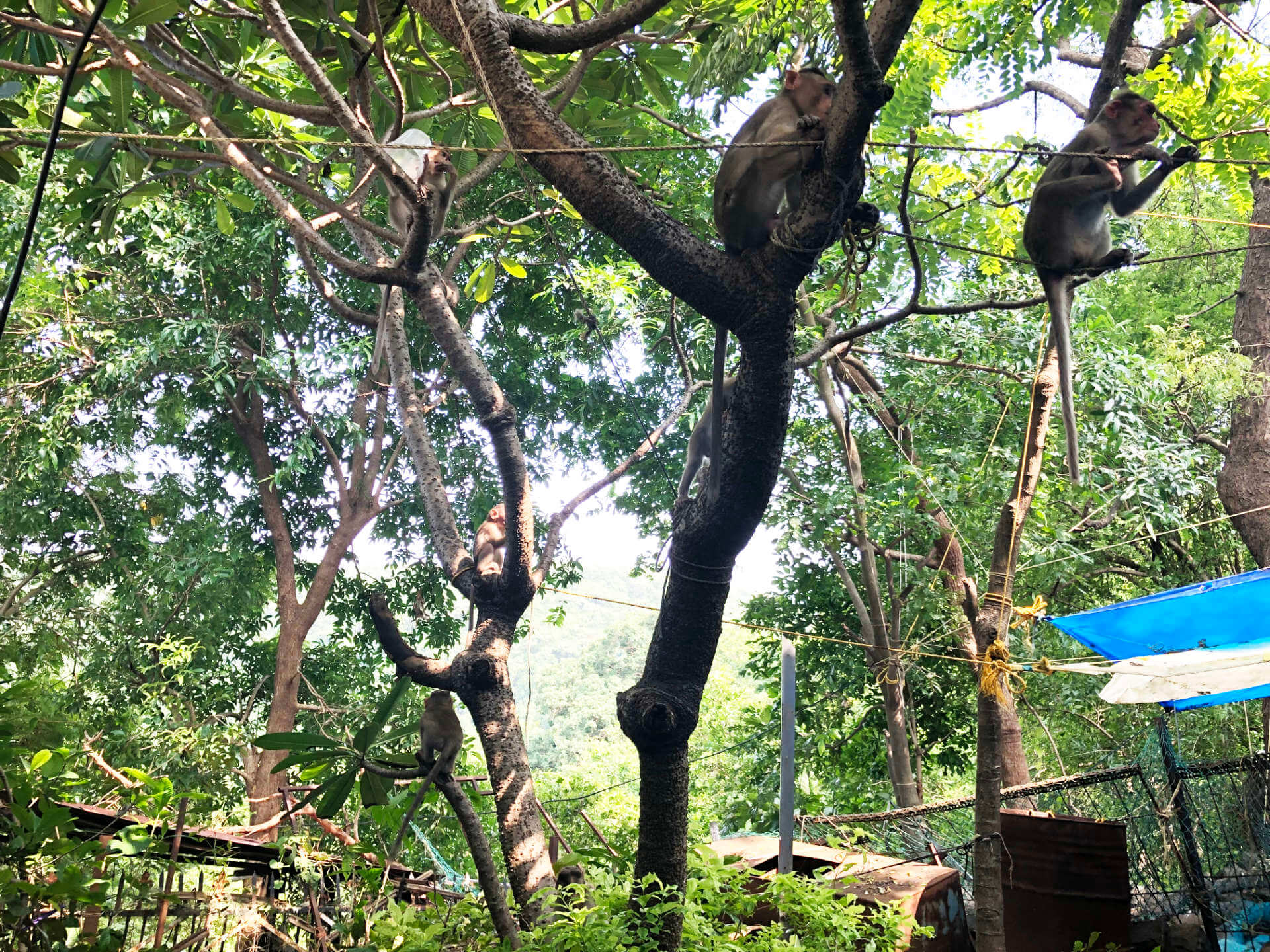 Indien Mumbai Elephanta Island Affen im Baum