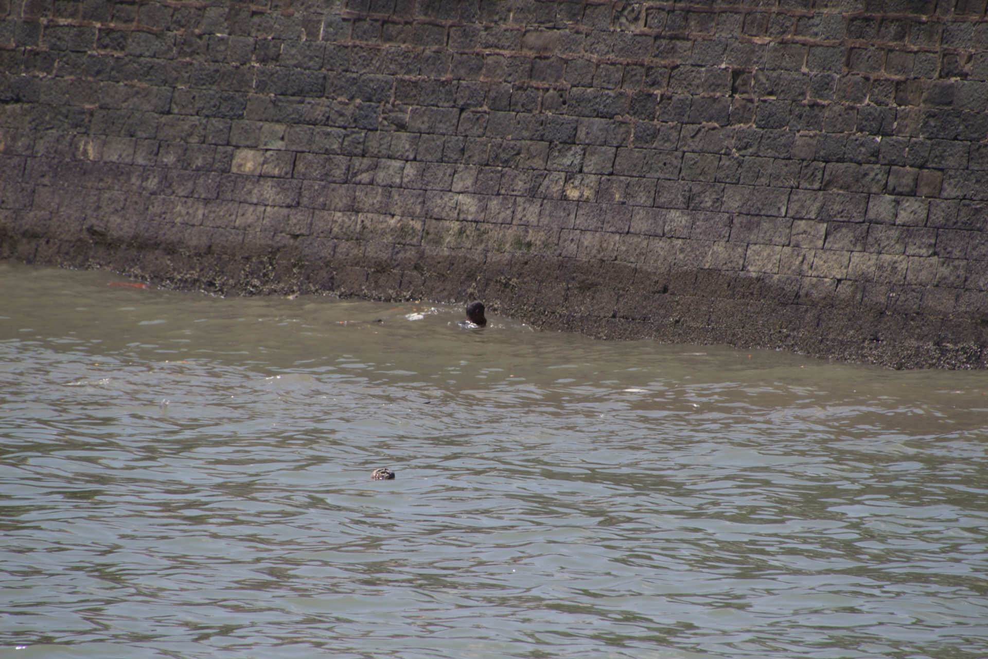 Indien Mumbai Harbor Mensch sucht Wertgegenstände
