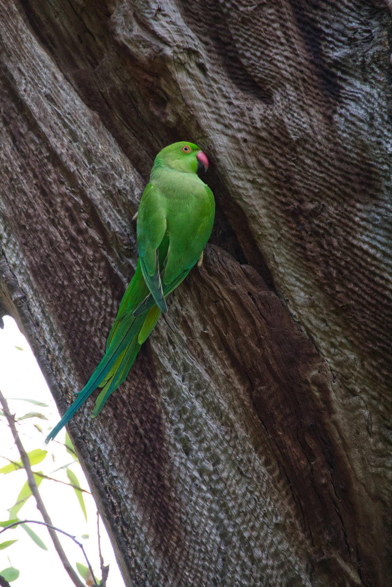 Vogel in den Lodi Gärten in Neu-Delhi