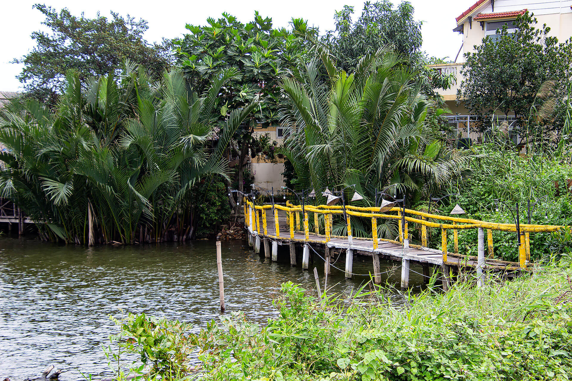 Water Coconut Palm Forest in Hoi An