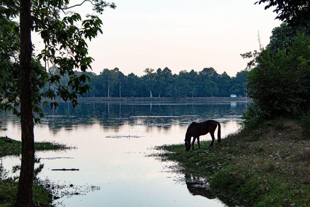 Angkor Wat - Pferd