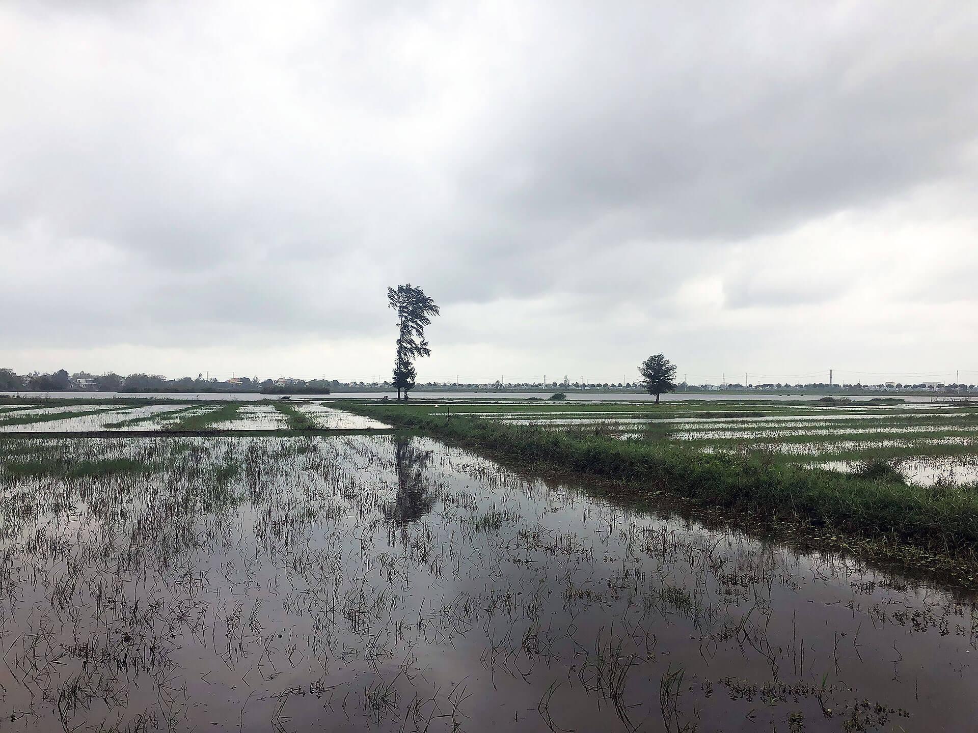 Reisfelder in Hoi An