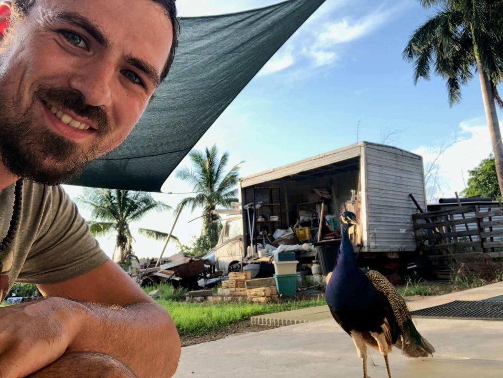 Berti und ein Pfau in Berry Springs
