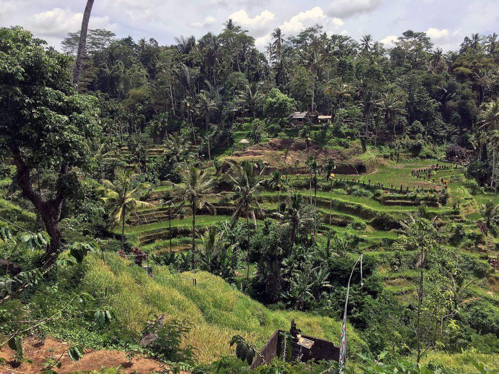 Reisterassen von Tegallalang