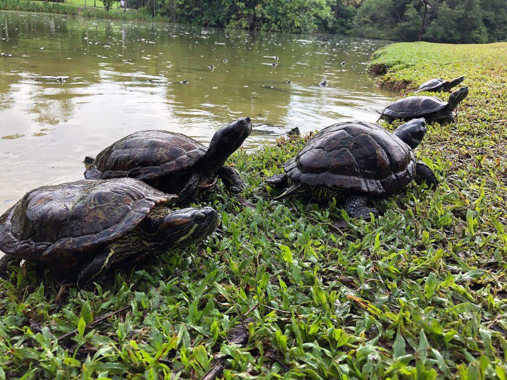 Schildkröten im Botanischen Garten