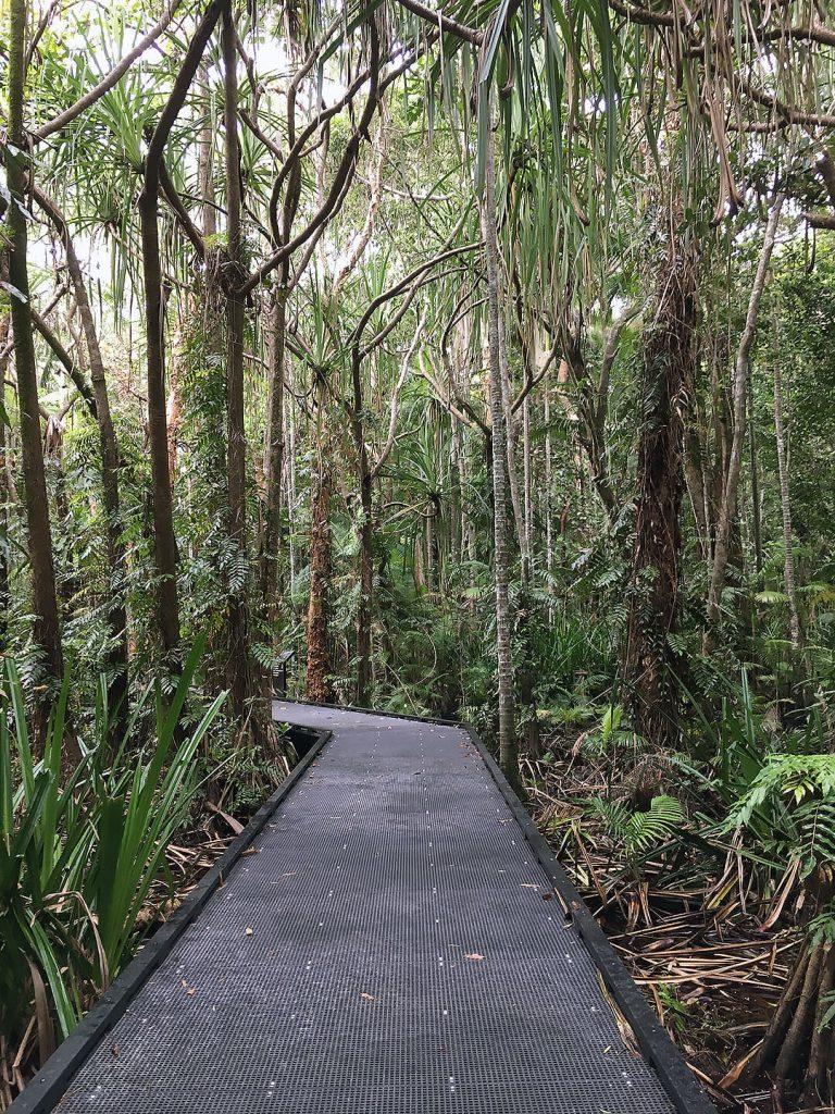 Regenwald im Botanischen Garten