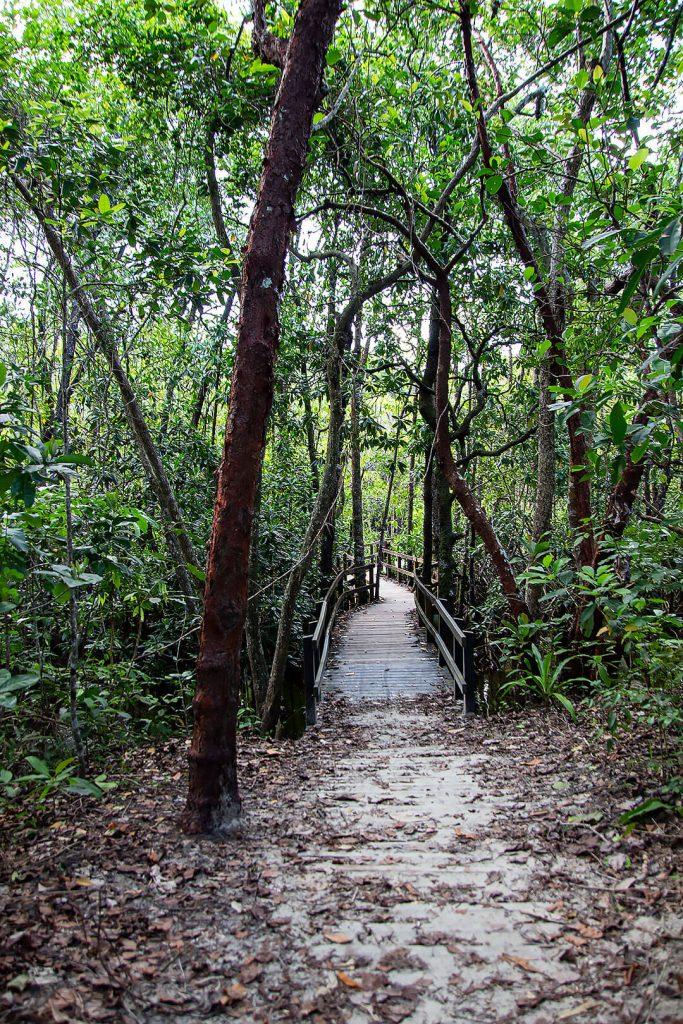 Weg im Daintree Rainforest