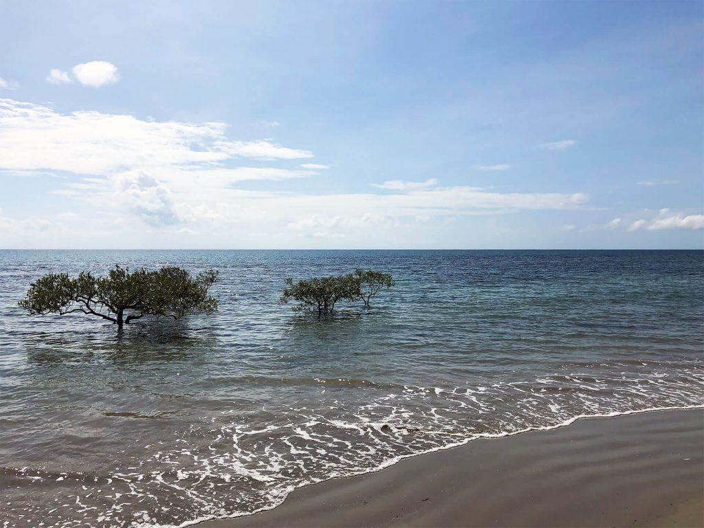 Noah Beach am Cape Tribulation