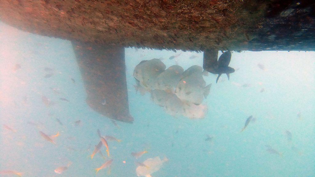 Fische unter dem Boot