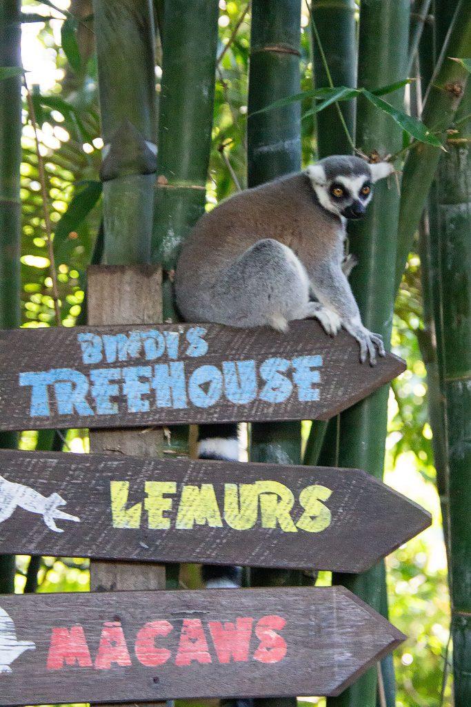Lemure auf Schild