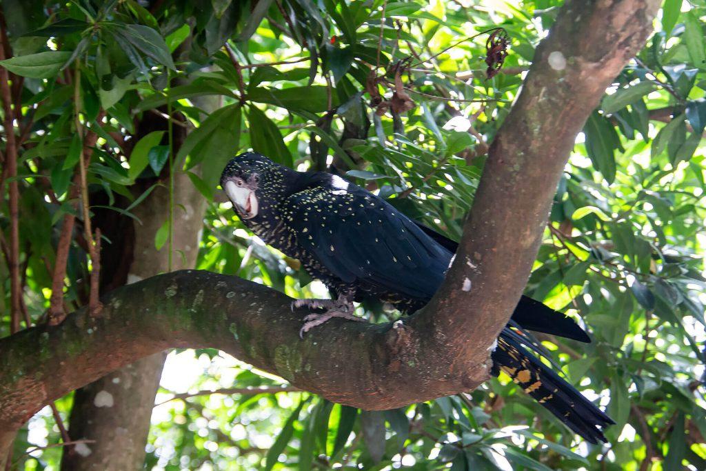 Papagei auf Baum