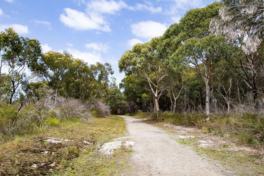 Murrays Trail