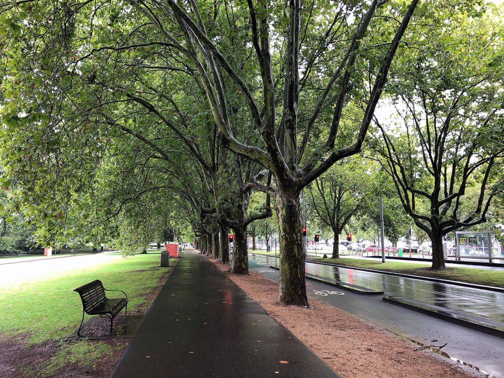 Tarnbäume beim Royal Botanic Garden in Melbourne