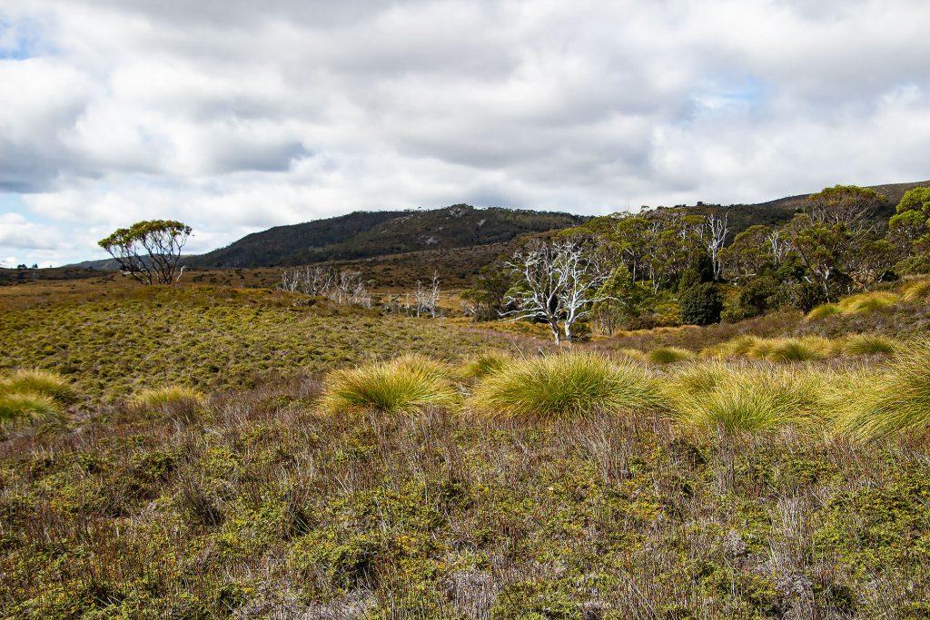 Overland Track im Cradle Mountain Nationalpark